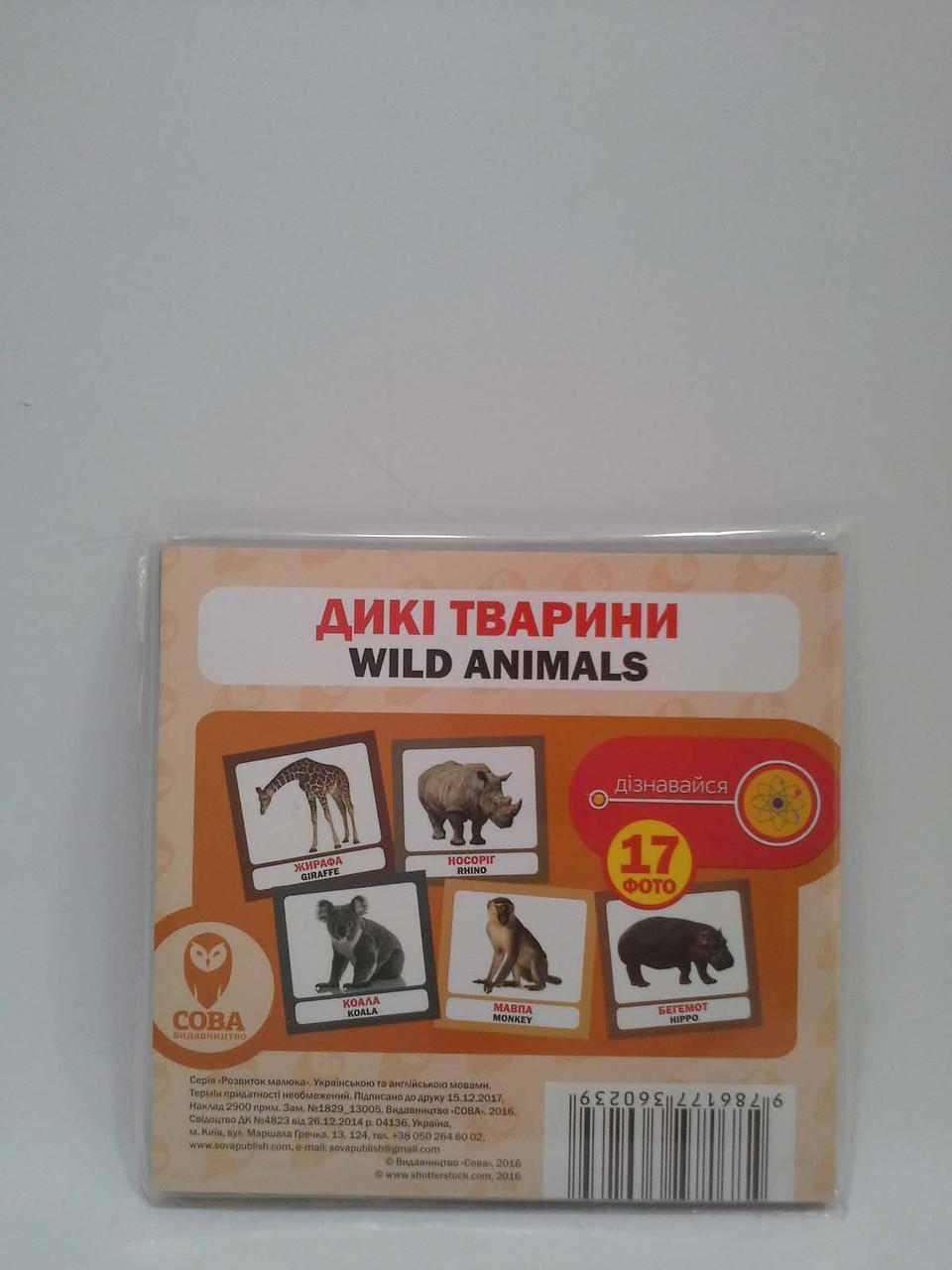 Сова Розвиток малюка Дикі тварини (17 карток)
