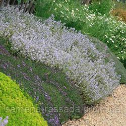 Обновлён ассортимент почвопокровных растений