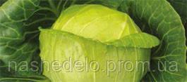 Семена капусты б/к Килагрег F1 2500 семян Syngenta