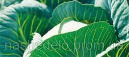 Семена капусты б/к Куизор F1 250 семян Syngenta