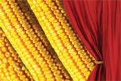 Семена кукурузы Фурио