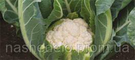 Семена цветной капусты Аламбра F1 2500 семян Syngenta