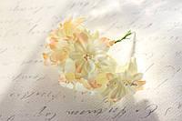Декоративные цветы лилии диаметр 5 см, кремового цвета, фото 1