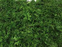 Стабилизированный мох папоротниковый, фото 1