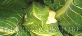 Семена цветной капусты Кортес F1 100 семян Syngenta