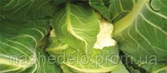 Семена цветной капусты Кортес F1 2500 семян Syngenta