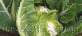 Семена цветной капусты Кул F1 2500 семян Syngenta