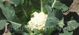 Семена цветной капусты Ливингстон F1 2500 семян Syngenta