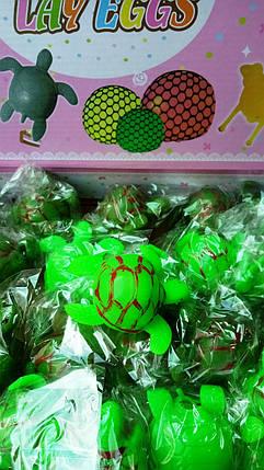 """Игрушка антистресс  """"Яйцо в черепахе"""" (уп.24шт), фото 2"""