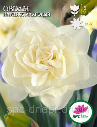 Нарцисс махровый Obdam, фото 2