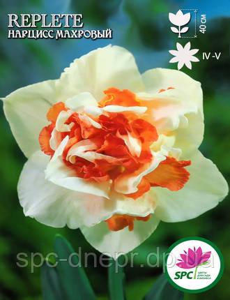 Нарцисс махровый Replete, фото 2