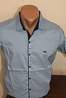 Мужская рубашка с коротким рукавом  Paul Semih