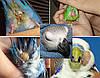 Болезни попугаев симптомы и их лечение