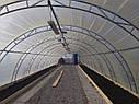 """Фермерская теплица """"Урожай"""" 6х70 под один слой плёнки, фото 3"""