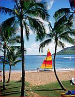 Фотообои пальмы, парусник, океан