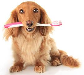 Гигиена ротовой полости собак