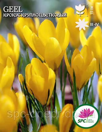 Крокус крупноцветковый Geel, фото 2