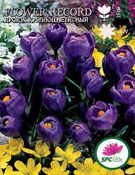 Крокус крупноцветковый Flower Record