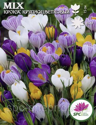 Крокус Крупноцветковый Mix