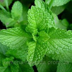 Обновлён ассортимент лекарственных и пряноароматических растений