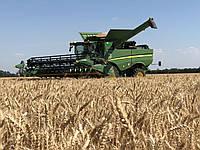 Семена пшеница озимая МАГНИТКА элита оригинатор ЧСС ОП БОР