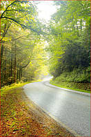 Фотообои дорога через лес