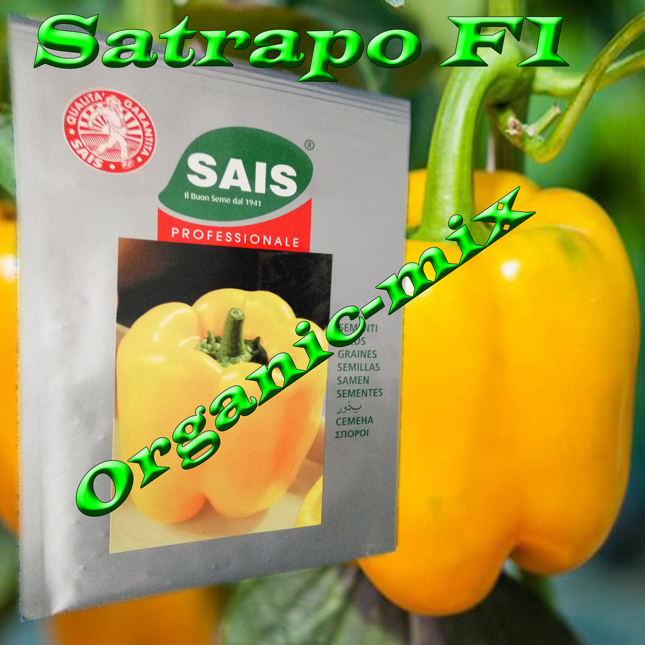Перец сладкий желтый ранний САТРАПО F1 / SATRAPO F1, проф. пакет 1000 семян ТМ Sais (Италия)