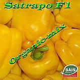 САТРАПО F1 / SATRAPO F1, семена желтого перца, проф. пакет 100 семян ТМ Sais (Италия), фото 3