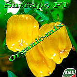 САТРАПО F1 / SATRAPO F1, семена желтого перца, проф. пакет 100 семян ТМ Sais (Италия), фото 4