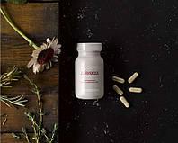 Echinacea (эхинацея) - средство для повышение иммунитета, профилактики ОРВИ, иммуномодулятор Modere