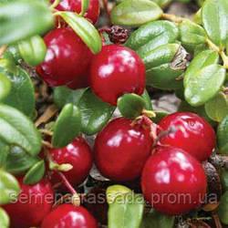 Обновлён ассортимент ягодных кустарников