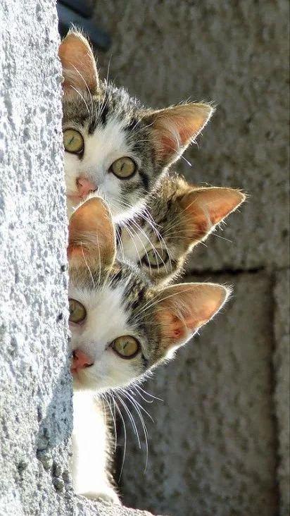 3 котёнка Картинка 3.