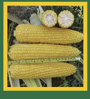 Сладкая кукуруза TESS F1