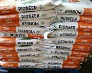 Семена подсолнечника PR64E83 (Пионер)