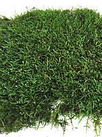 Стабилизированный мох плоский, фото 1