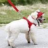 Шапка, панамка для собаки.  Шапки для собаки, фото 6