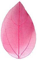 Сухой лист розовый,в упаковке 2 шт.