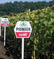 Семена подсолнечника Pioneer PR63А62, фото 1