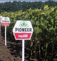 Семена подсолнечника Pioneer PR63А90, фото 1