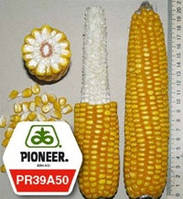 Семена кукурузы ПР39А50