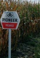 Семена кукурузы ПР39Н32