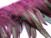 Перья петуха, фиолет