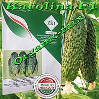 Огурец лучший для консервирования КАРОЛИНА F1 / KAROLINA F1, 1000 семян TM ZKI (Венгрия)