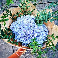 """Букет из гортензии """"Голубое облачко"""", фото 1"""