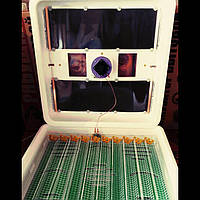 Инкубатор Рябушка Smart plusTurbo 120 яиц с автоматическим переворотом и цифровым терморегулятором