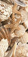 Плитка Sea Breeze Shells 300x600