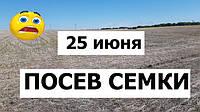 Посев подсолнечника по технологии no-till 25 июня сеялкой John Deere 7200 с Precision Planting