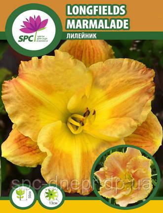 Лилейник Longfields Marmalade, фото 2