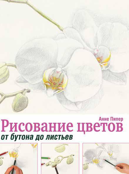 Рисование цветов от бутона до листьев