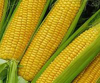 Семена кукурузы П9400, фото 1